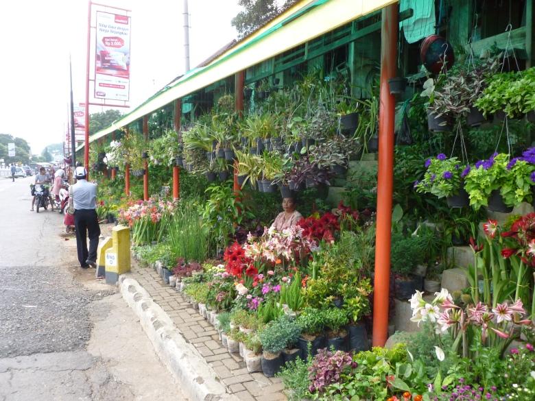 Flower Street